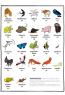 Тваринопедія. Зібрання найдивовижніших створінь на землі
